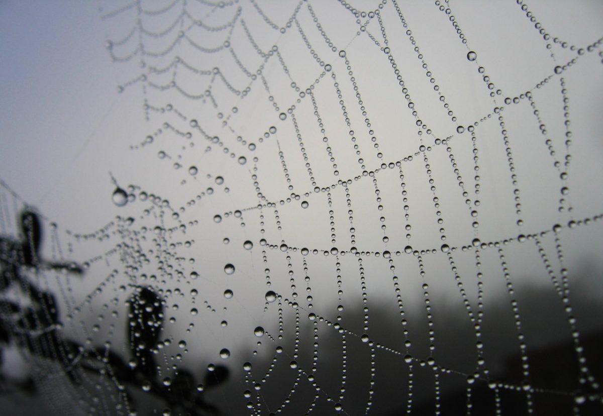 Waverley Web